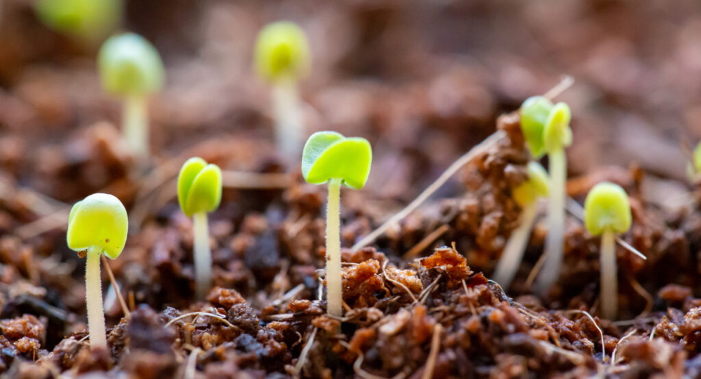 growth mindset green shoots